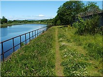 NS3975 : Footpath beside the River Leven by Lairich Rig
