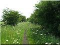 TA2823 : Cycle track towards Patrington by JThomas