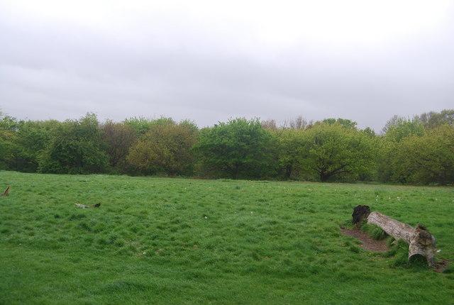 Woodland, Streatham Common