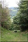 SK2479 : Bole Hill Quarry, Upper Padley, Derbyshire by Graham Hogg