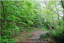 TQ3472 : Path in Sydenham Hill Wood Nature Reserve by N Chadwick