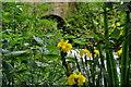 TG2233 : Yellow Iris by Ashley Dace
