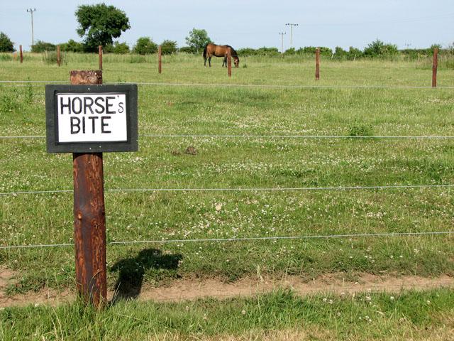 Horses that bite - at Manor Farm, Coxford