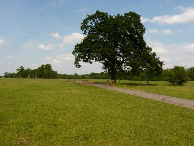 Crossroads of estate tracks
