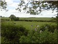 O0264 : Pasture Fields, Timoole, Co Meath by C O'Flanagan