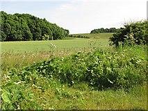 NT8754 : Wheat field by Richard Webb
