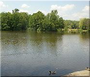 SO6302 : Lydney Boating Lake by Jaggery