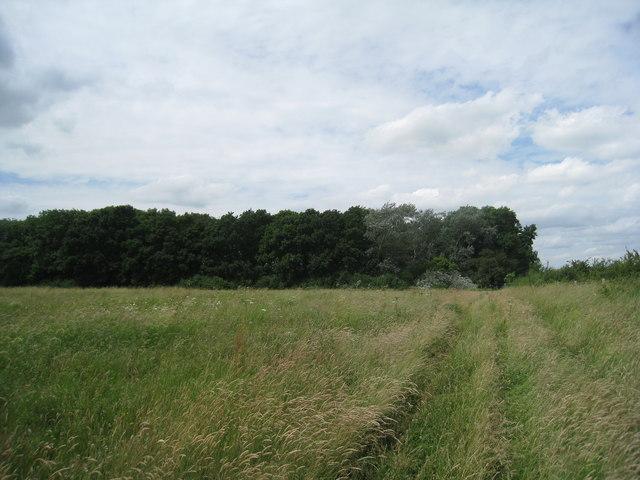 Long's Plantation
