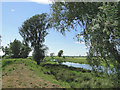 TM4591 : From the bank of the River Waveney by Adrian S Pye