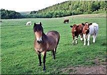 NZ5906 : Local Residents, Bank Foot Farm by Paul Buckingham