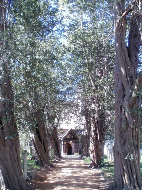 Yew-lined way to St John's church, Westborne