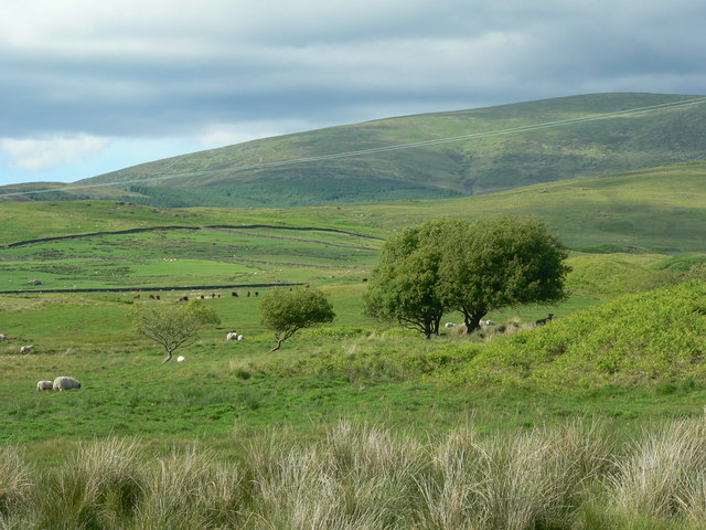 Hill grazing, Clanery Farm