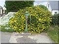 N9561 : Pump, Co Meath by C O'Flanagan