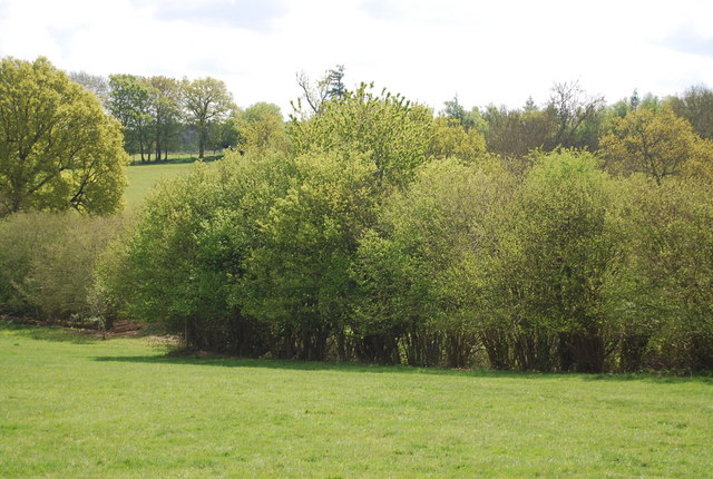 Woodland south of the Sussex Border Path