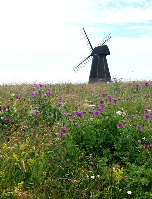 Wild flowers by Rottingdean Windmill