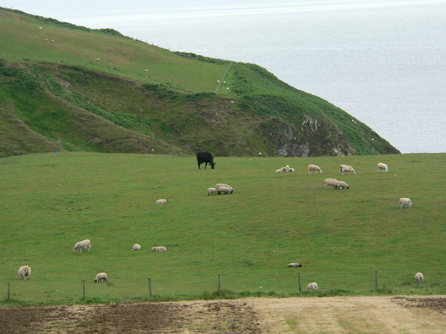 Grazing above cliff tops