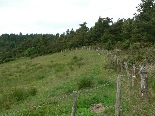 Edge of Cockalane Forest