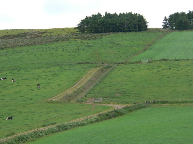 Small wood and track on Cnoc Mor