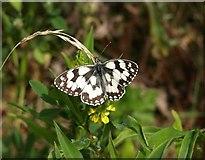 SX9066 : Butterfly, Barton tip by Derek Harper