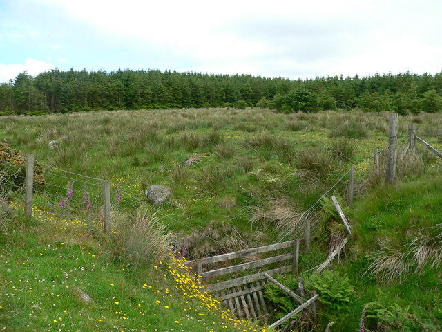 Sheep fencing in ditch