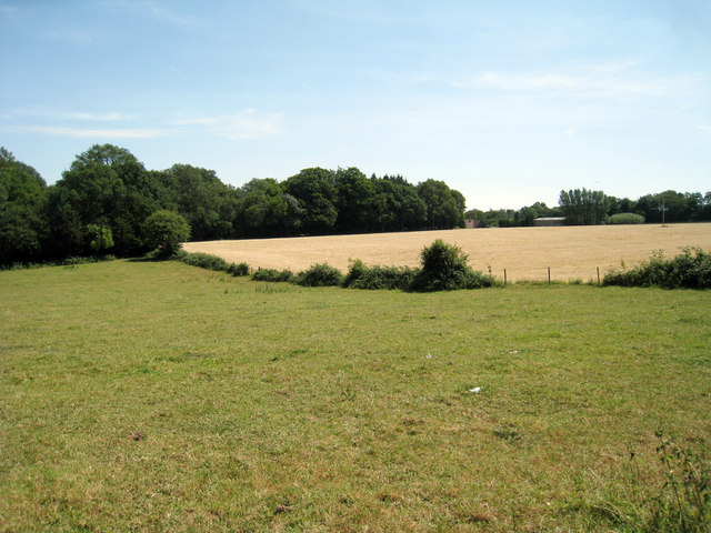 Fields of Buckhurst Road