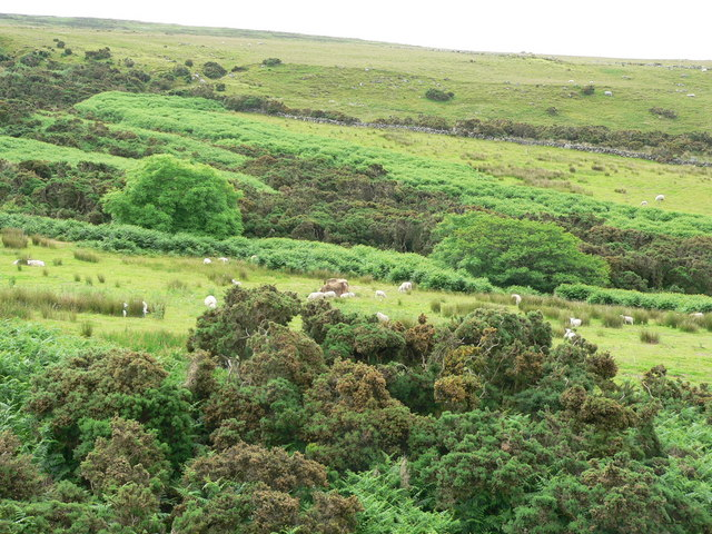Moorland on west coast of Kintyre