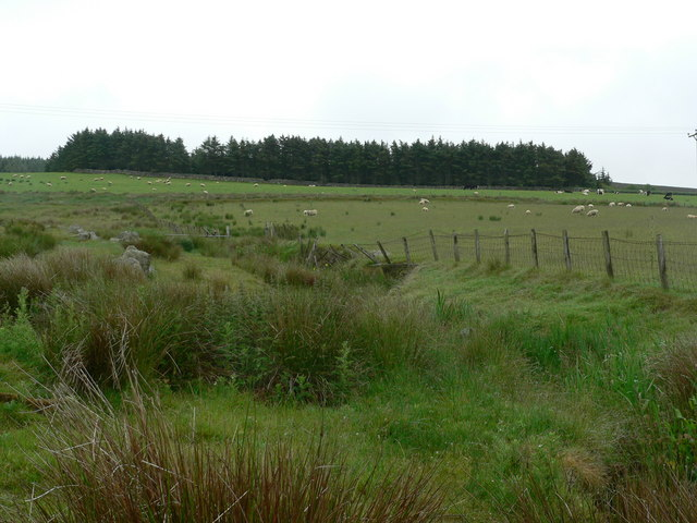 Small wood surrounded by rough grazing