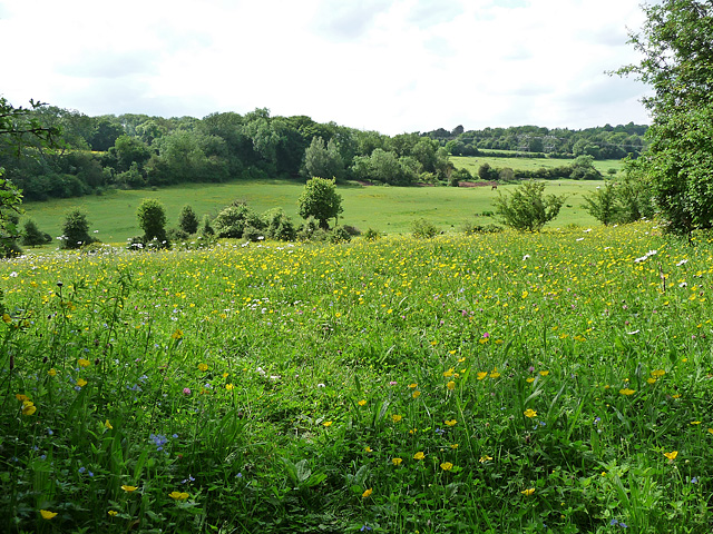 Fields near Downe (1)