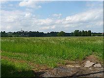 TQ4262 : Farmland near Downe by Stephen Richards