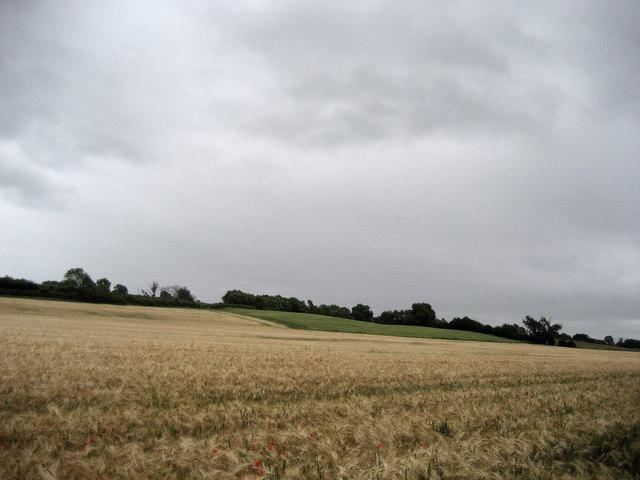 Fields near Middleton One Row