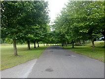 SD8203 : Avenue in Heaton Park by Bill Boaden