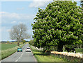 ST7879 : 2010 : Minor road and horse chestnut in flower by Maurice Pullin