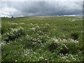 NZ4313 : Floral Display near Eaglescliffe by Chris Heaton