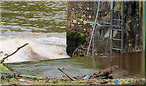 J3470 : The Stranmillis weir, Belfast (8) by Albert Bridge
