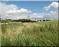 TF8212 : Electricity pylons in cultivated fields north of Southacre Road by Evelyn Simak