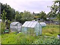 NZ2762 : Allotments, off William Street, Felling by Andrew Curtis