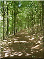 SO7599 : Bridleway in Newton's Wood by Richard Law