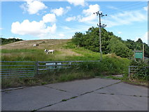SO7598 : Horses grazing at the entrance to Brook Vale Farm by Richard Law