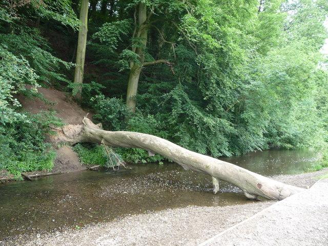 Fallen tree bridge in Erddig Park