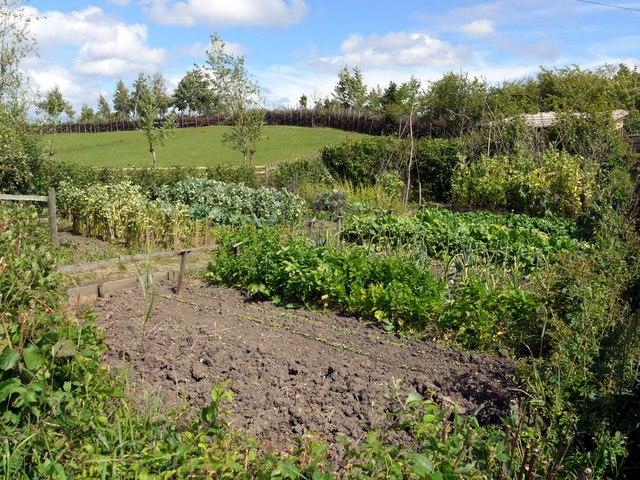 Anglo-Saxon Vegetable Garden, Bede's World