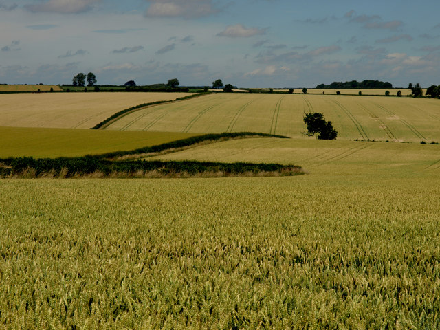 Wheat Fields West of Holme-on-the-Wolds