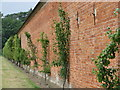 TF8742 : Outer wall of the walled garden at Holkham Hall by Sarah Charlesworth