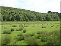 NY6858 : Pastures and Beaconhill Plantation by Mike Quinn