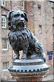 NT2573 : Greyfriars Bobby by william