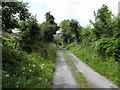 C1411 : Lane, Ballymacool by Kenneth  Allen