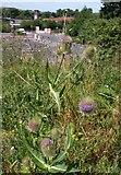 SX9066 : Teasel, Broomhill Way, Torquay by Derek Harper