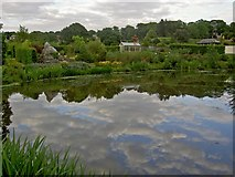 SE2853 : Evening reflections of Harlow Carr by Steve  Fareham