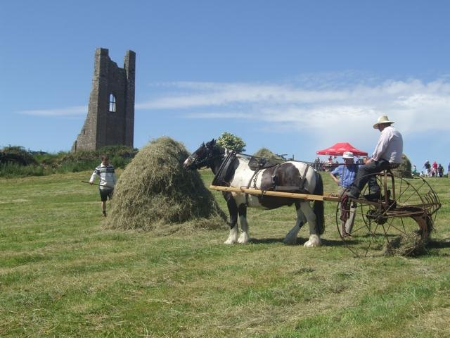 Hay making at Trim