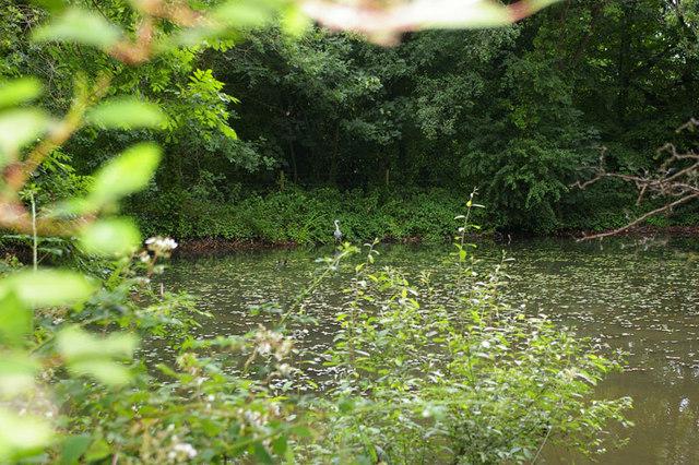 Header pond