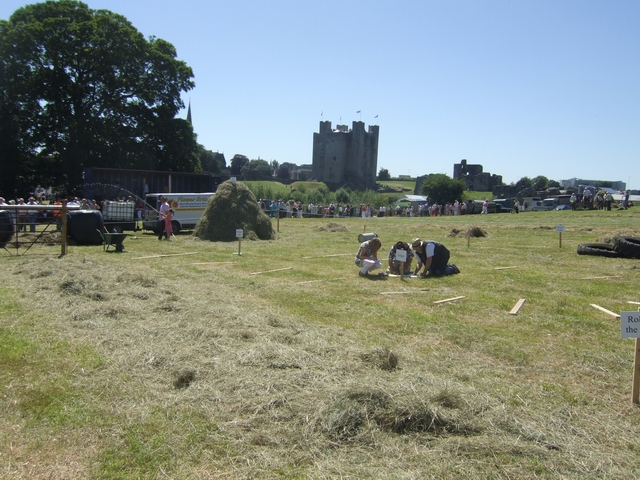 Judging in the hay meadow at Trim